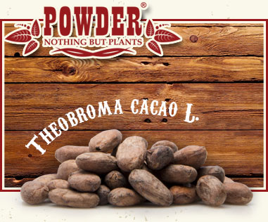 POWDER - CACAO BIO