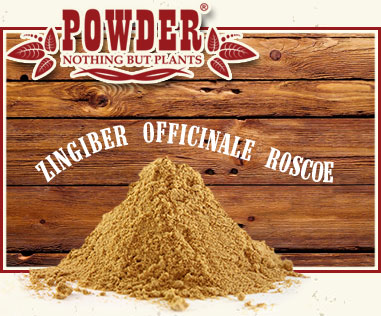 POWDER - RHIZOME DE GINGEMBRE