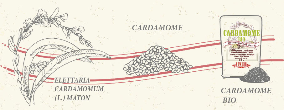CARDAMOME BIO POWDER