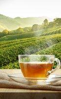 Le thé, une source de propriétés antioxydantes