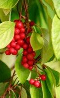 5 Plantes adaptogènes pour lutter contre le stress
