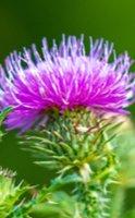 Les 6 plantes pour un plan détox naturel